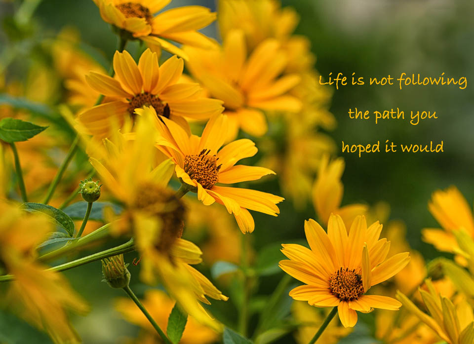 Life Is Not Following (Downloadable)